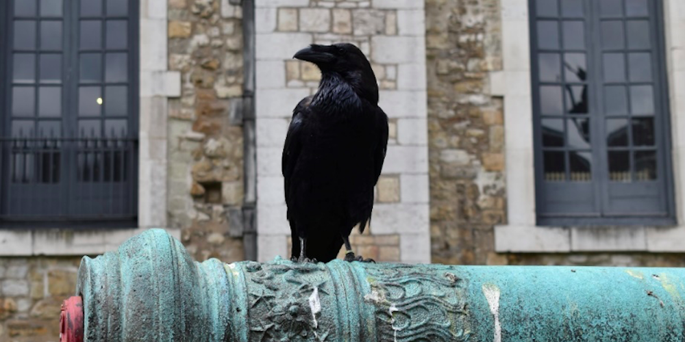 From the Desk of George Lynch: There's More Than One Way To Skin A Crow